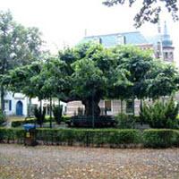 de lindeboom in oisterwijk